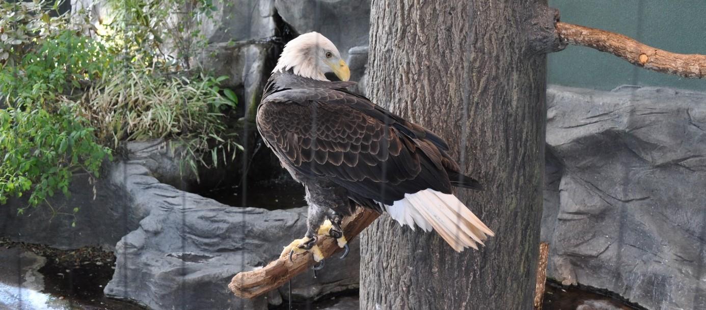free the eagle