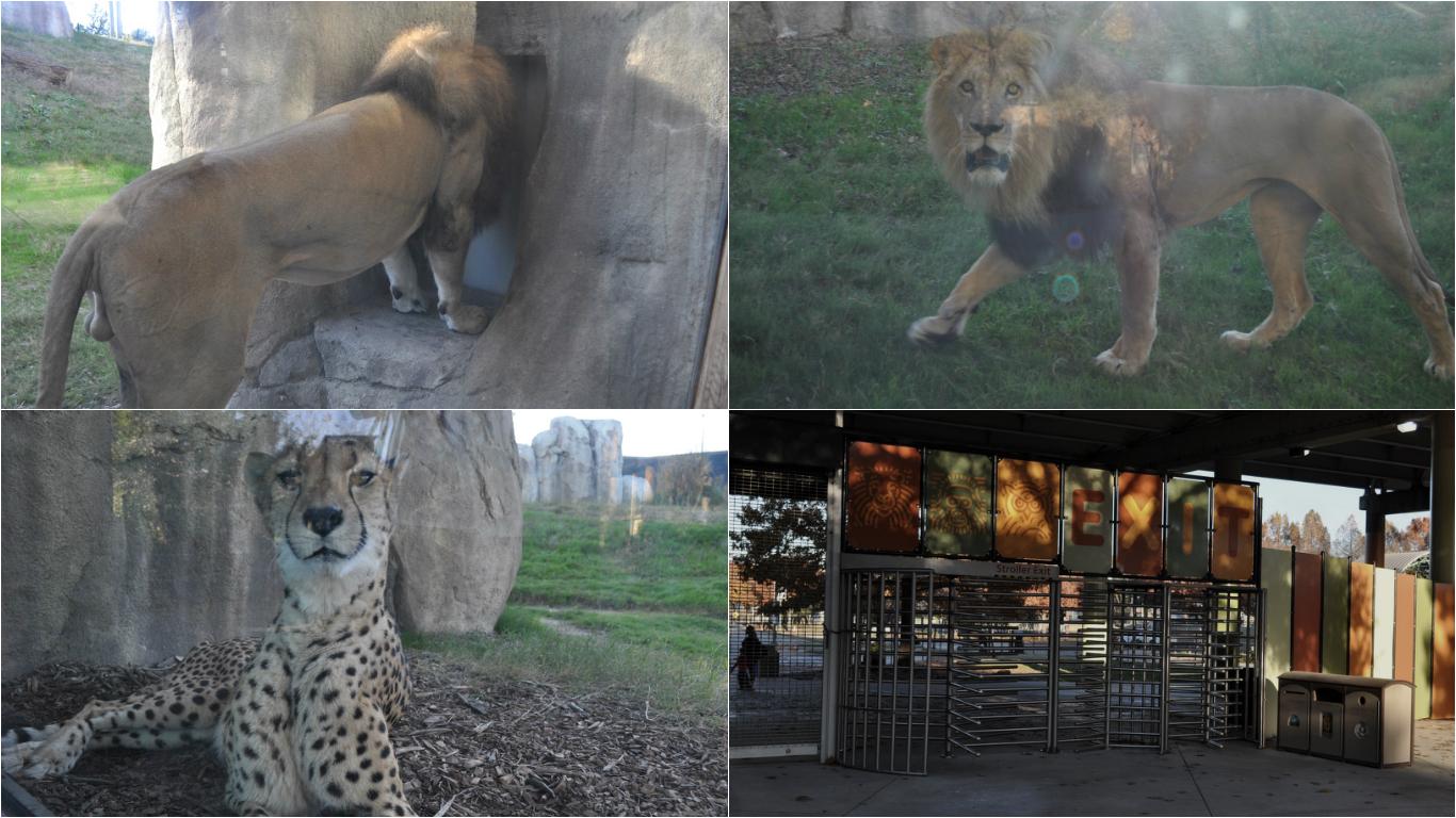 zoo000